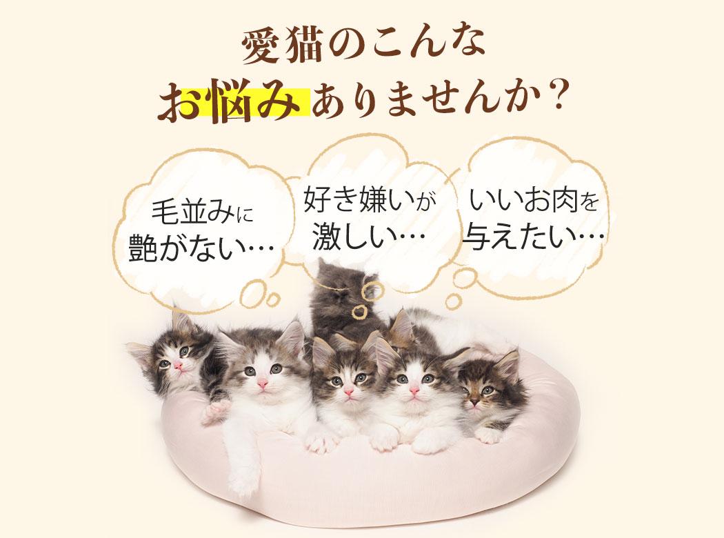 愛猫のこんなお悩みありませんか?